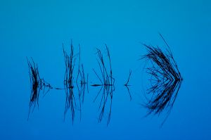 Blue-reflect by Jerry Segraves