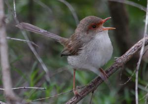bird-song-image-11