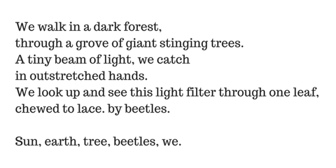 we-walk-in-a-dark-forestthrough-a-grove-of-giant-stinging-trees-a-tiny-beam-of-light-we-catch-in-outstretched-hands-we-look-up-and-see-this-light-filter-through-one-leaf-chewed-to-lace-by-beetles